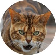 Tiger the PumpHouse Theatre Cat